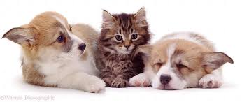 puppis & kitten bay Hall1 courtesy fansshare.com