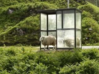 sheep-974107_960_720